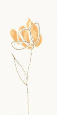 witmb009-tulip-oranzova-inzerto-kvetinove.jpg